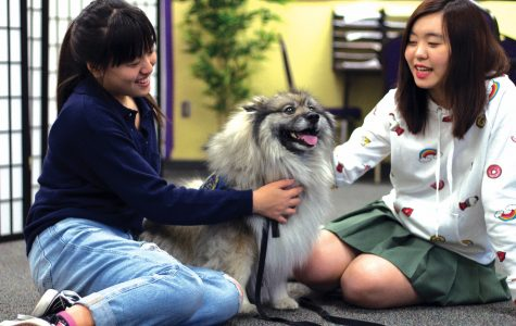 Wellness Center welcomes Thursday therapy dogs
