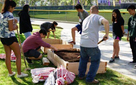 Growing a greener environment