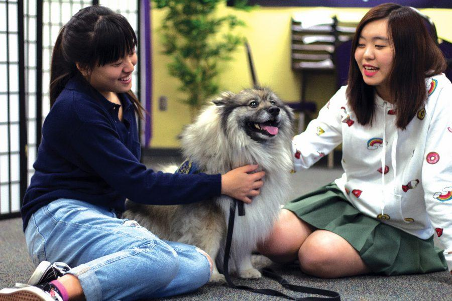 Junior peer counselors Daisy Tseng and Michelle Shen work in the Wellness Center with Cape, a therapy dog.