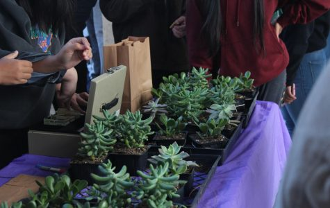 Succulent sales at lunch