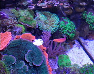 Student specializes in breeding, selling coral